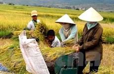 Thế giới khan hiếm gạo trong năm 2009