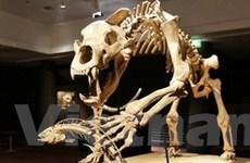 Đấu giá những bộ xương cổ đại quý hiếm