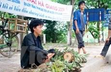 Khai thác bừa bãi phong lan rừng tại Hà Giang