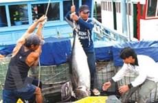 Phú Yên: Trên 145 tỷ đồng hỗ trợ ngư dân