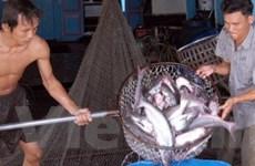 Dự báo xuất khẩu cá tra có tín hiệu khả quan