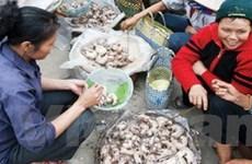 Nhập 50 tấn thịt chuột từ Campuchia mỗi ngày