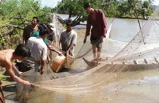 Vườn Quốc gia mũi Cà Mau bị xâm hại nặng nề