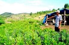Hỗ trợ hộ nghèo phát triển sản xuất kinh doanh