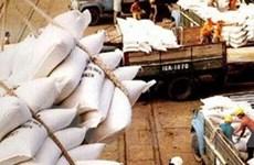 Cần rà soát lại bộ máy điều hành xuất khẩu gạo