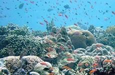 WWF cảnh báo việc lãng phí sinh vật biển
