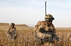 Afghanistan tiếp tục truy quét tàn quân Taliban