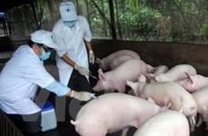 Cơ bản khống chế dịch bệnh gia súc, gia cầm
