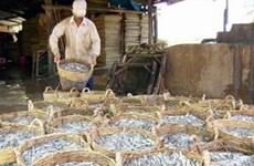 Bình Thuận: Ngư dân trúng đậm cá cơm