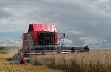 Nga đứng thứ 3 thế giới về xuất khẩu ngũ cốc