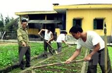 Mô hình trồng rau ở Trường Sa giành giải sáng tạo
