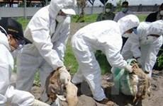 Thêm một ca nhiễm cúm A/H5N1 tử vong