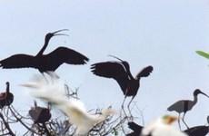 Nguy cơ cháy 120ha rừng Vườn chim Bạc Liêu