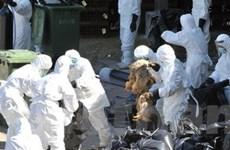 Dịch cúm gia cầm tại Hongkong do virus H5N1