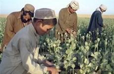 Afghanistan truy quét sào huyệt ma túy Taliban