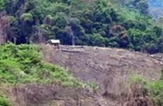 Tan tác vùng đệm Vườn quốc gia Chư Yang Sin