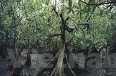 Rừng ngập mặn bị phá hủy nghiêm trọng