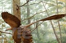 Phát hiện hóa thạch của loài khủng long tí hon