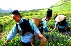 Thêm viện trợ từ ADB cho xóa đói giảm nghèo