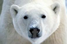 Những câu chuyện kỳ thú trong thế giới động vật năm 2008