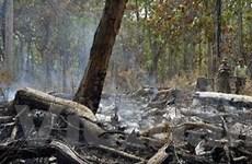 Đắk Lắk: Rừng đặc dụng đang bị xâm hại