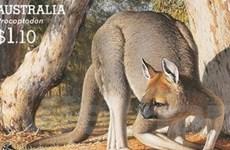 Kangaroo khổng lồ tuyệt chủng vì bị săn bắt