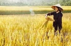 """""""Rác nông nghiệp"""" đủ nuôi sống hàng tỷ người"""
