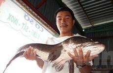 Kiên Giang: Bắt được con cá lóc gần 10 kg