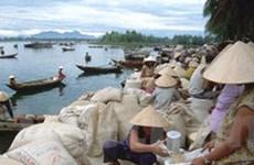 Giá gạo trong nước có xu hướng giảm nhẹ