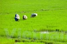 """FDI nông nghiệp đang """"teo tóp"""""""