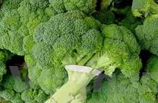 """""""Siêu"""" rau xanh giàu chất chống ôxy hóa"""