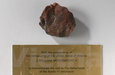"""Bẽ bàng chuyện """"đá mặt trăng hóa gỗ"""" ở Hà Lan"""