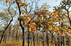 Đắc Lắk: Dự án cải tạo rừng hay phá rừng?