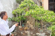 Làng cổ Triều Khúc: Người mất cây cũng chịu tang