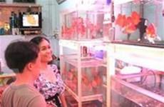 Kinh doanh cá cảnh xuất khẩu phát triển mạnh