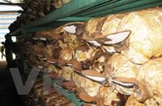 Bảo tồn, phát triển các loài nấm ở Cát Tiên