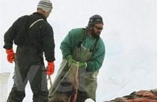 Cuộc chiến giữa Canada-EU về sản phẩm từ hải cẩu