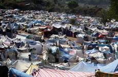 Hội Chữ thập đỏ ủng hộ nhân dân Haiti 20.000USD