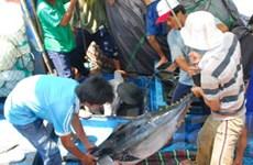 Thêm các thị trường mới cho xuất khẩu cá ngừ