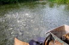 Vi phạm trong thủy sản bị phạt tới 40 triệu đồng