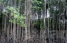 Đức xây vườn ươm rừng ngập mặn tại Bạc Liêu