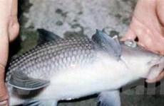 Ra mắt Atlas loài thủy sinh quý hiếm ở Việt Nam