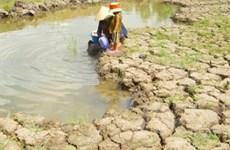 Xâm nhập mặn đe dọa ngành nông nghiệp Nghệ An