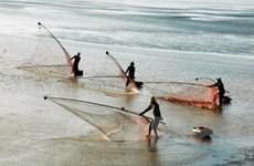 Được mùa, ngư dân Bạc Liêu vẫn lỗ nặng vì mưa