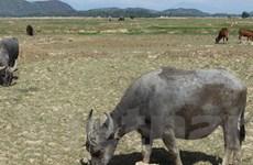 Cấp bách triển khai biện pháp khắc phục thiếu nước