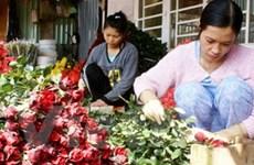 Giá hoa hồng Đà Lạt tăng cao nhưng vẫn khan hàng
