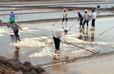 Bến Tre: Mưa trái mùa làm chảy hàng ngàn tấn muối