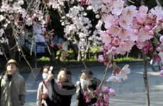 Động đất gây chấn động ngành du lịch Nhật Bản