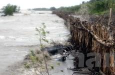 Đồng Tháp: Vỡ đê bao nhấn chìm trên 200 ha lúa