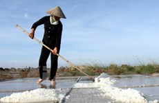 Bạc Liêu: Vào mùa nhưng đồng muối vắng diêm dân